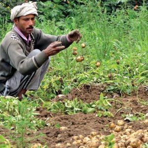 farmer-wid-potato